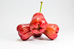 Rose Apple Royaltyfria Bilder