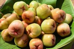 Rose apple. Chompoophet thai name, Rose apple. (Eugenia javanica lamk. Family myrtaceae Royalty Free Stock Photo