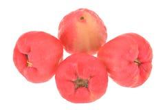 Rose Apple Fruit, Jambu Stock Photos