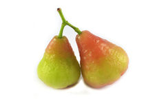 Rose apple green Stock Photography
