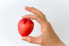 Rose Apple in Hand. A whole rose apple held in the hand of a young woman, isolated on white Stock Photography