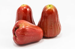 Rose apple isolated on white background Royalty Free Stock Images