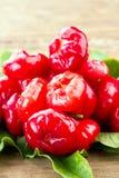 Rose Apple Plastic Daeng rouge vive fraîche Photographie stock libre de droits