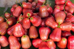 Rose apple sale in the Market. High nutrition tropical Asian fruit Royalty Free Stock Photography