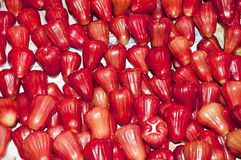 Rose apples Stock Image