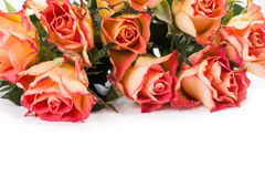 Rose arancio sopra bianco Fotografia Stock