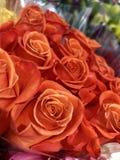 rose arancioni immagine stock