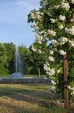 Rose arbor and fountain Royalty Free Stock Photo