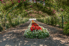 Rose Arbor At Point Defiance 2 foto de stock royalty free