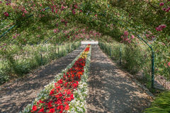 Rose Arbor At Point Defiance 3. A arbor of Roses covers a center garden at Point Defiance Park in Tacoma, Washington Stock Image