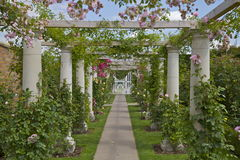 Rose Arbour. A pretty Rose Arbour in an English Country Garden Stock Image