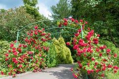 Rose arc bush. Arc of rose bush flower in garden Royalty Free Stock Image