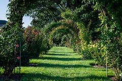 Rose Arch fotografia stock libera da diritti