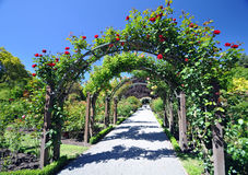 The Rose Arch Royalty Free Stock Photography