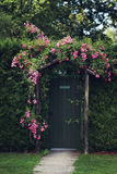 Rose Arch. Pink Rose growing over an arch above a garden gate Royalty Free Stock Image