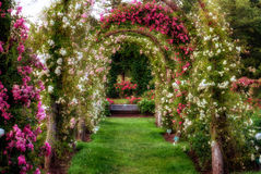 Rose Arches Stock Photography