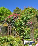 Rose arches at Christchurch Botanical Gardens. Rose arches and trellis at the Botanical Gardens, Christchurch, New Zealand Stock Photography