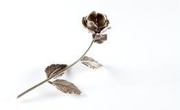 Rose argentée Image libre de droits