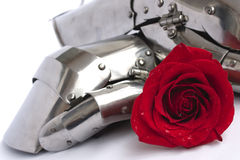 Rose and armor. Red rose in armor of knight Stock Image