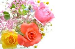 Rose arrangement Royalty Free Stock Image