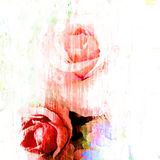Rose art with fade abstract texture Royalty Free Stock Image