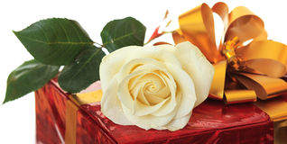 Rose as a gift. Royalty Free Stock Photography