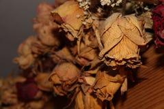 Rose asciutte Immagine Stock