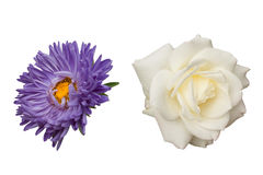 Rose and aster flowers Stock Photo