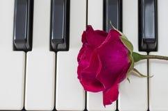 Rose au-dessus des clés de piano Image stock