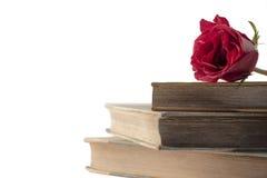 Rose auf Büchern Stockfoto