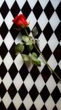 Rose auf Behälter Stockfotos