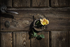 Rose auf der rustikalen Tür Stockfotografie