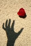 Rose auf der Wand Stockbilder