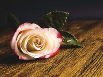 Rose auf einem hölzernen rustikalen Hintergrund Stockbilder