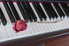 Rose auf einem Klavier Stockfotos