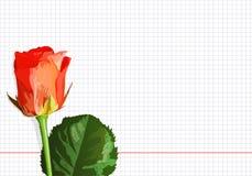 Rose auf einem Notizbuchblatt Stockbilder