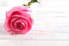Rose auf einem weißen hölzernen Hintergrund stockfotos