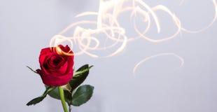 Rose auf Feuer Stockbilder