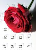 Rose auf Kalender Stockbild