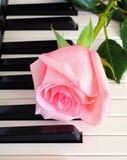 Rose auf Klaviertasten Stockbilder