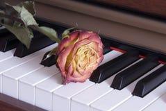 Rose auf Klaviertasten Stockfoto