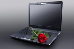 Rose auf Laptop Lizenzfreie Stockfotos
