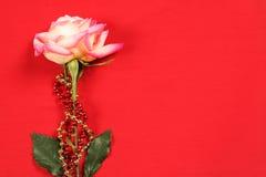 Rose auf Rot Stockfoto