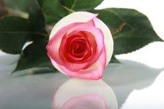 Rose auf Spiegeltabelle Stockbild