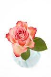 Rose auf Weiß Stockfotos