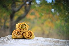 Rose of autumn Royalty Free Stock Photo