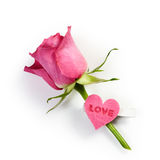 Rose avec amour Image stock