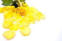 Rose avec des pétales Images stock
