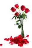 Rose avec des pétales sur le blanc Photos stock