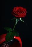 Rose avec la rosée photographie stock libre de droits